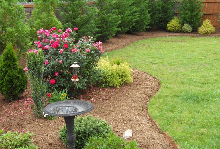 Deep Edged Curvilinear Bordered Natural Area w/ 'Sky Pencil' Holly, 'Knock-Out' Roses, Japanese Holly, Leyland Cypress & Cryptomeria Mulched w/ Aged Hardwood Mulch