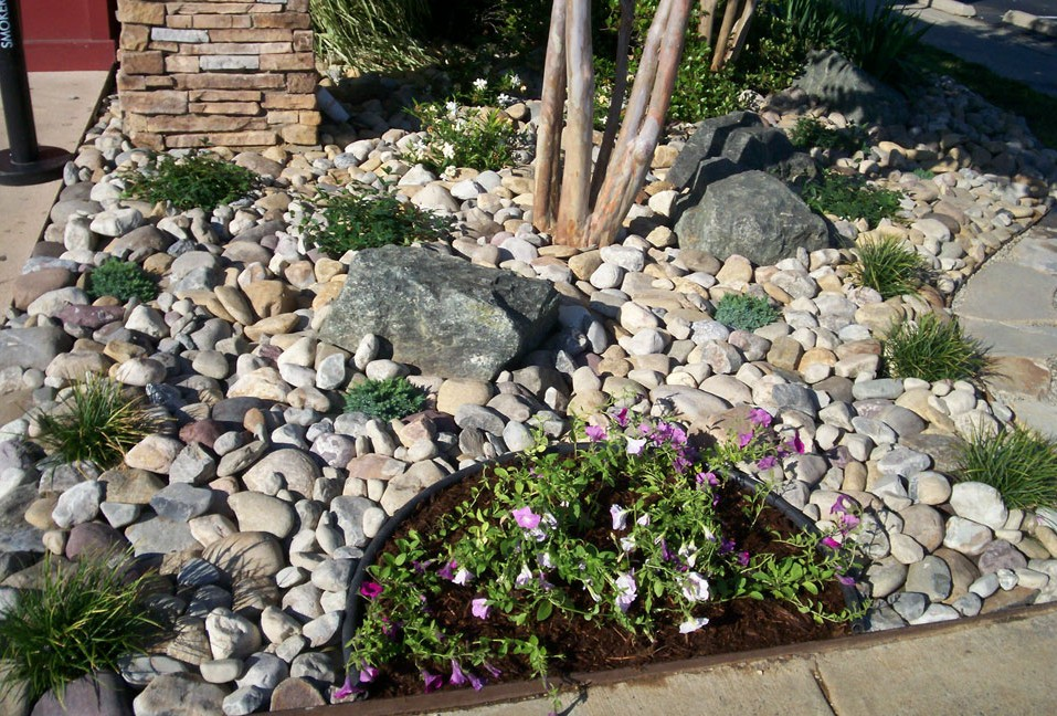 Delaware Valley River Round Stones as Garden Base accented w/ Seasonal Color, Mondo Grass, 'Blue Star' Juniper & 'Harbor Belle' Nandina