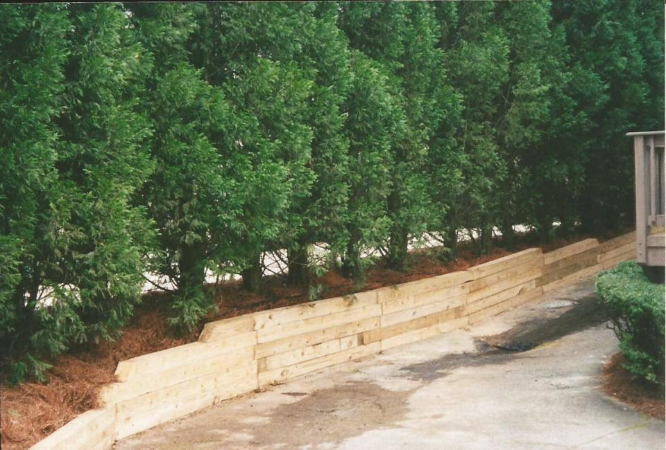 Pressure Treated Landscape Timber Retaining Wall Bordering Driveway W/  Cryptomeria U0027Radacansu0027 Evergreen Property